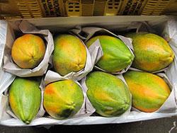 papaya fortalece el sistema inmunológico