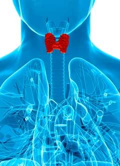 Selenio - tiroides
