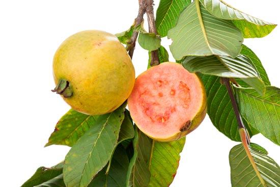 vitamina C guayabas