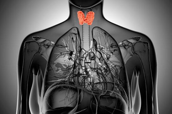 la glándula tiroides tsh