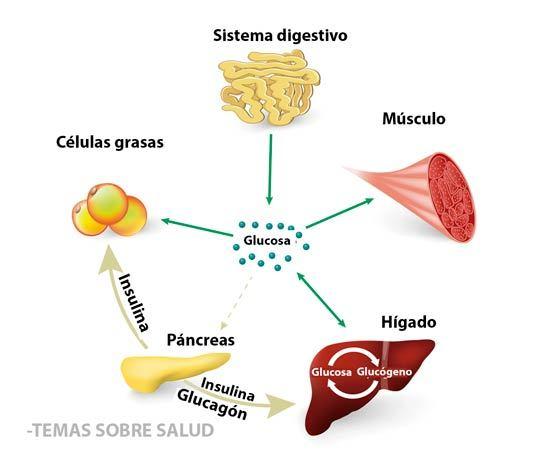 Diabético Tipo II hormonas