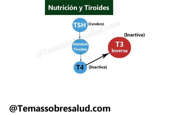 medicamentos para la tiroides Hashimoto