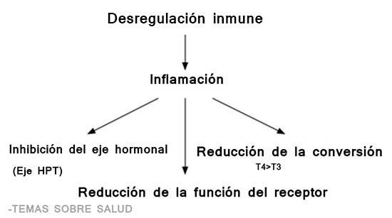 medicamentos para la tiroides levotirosina