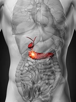 ¿Cuales son las funciones del páncreas?