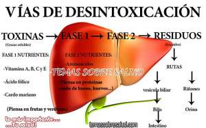 La raíz de Diente de León es efectiva para perder peso