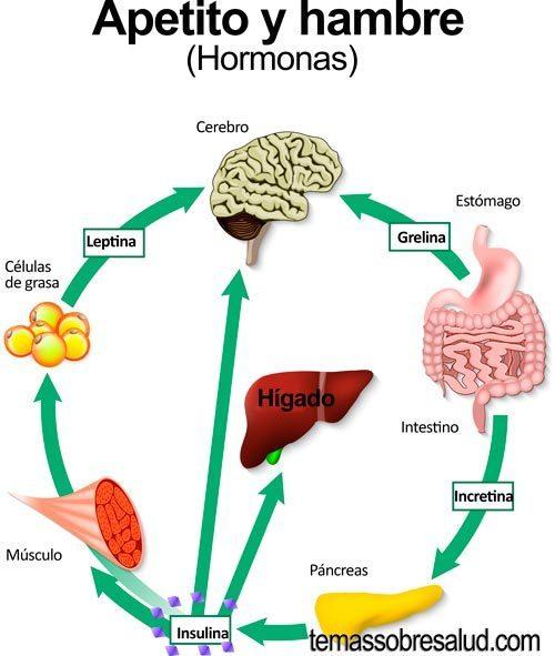 tienes hipotiroidismo