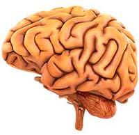 Sufrir estrés es un factor que contribuye a la pérdida de memoria sucralosa
