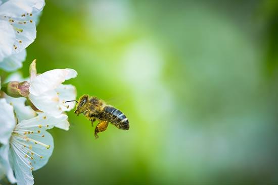 ¿Cocinar con miel es una práctica saludable?