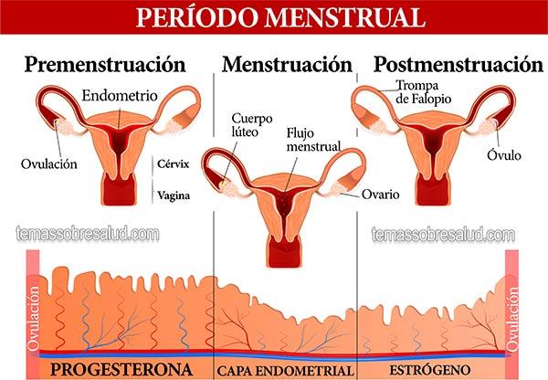 Hipotiroidismo y el Sangrado Después del Período Perimenopausia