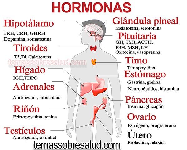 Conexión entre las Hormonas y la Vesícula Biliar hepatitis