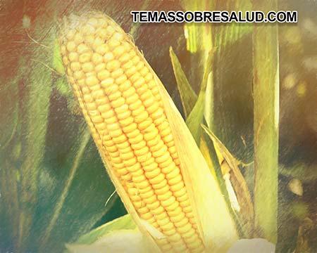 Los cereales causan problemas de autoinmunidad al afectar la mucosa intestinal