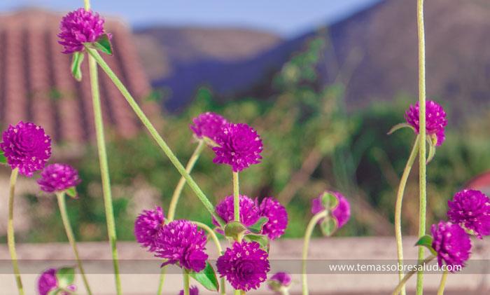 5 hierbas chinas para fortalecer la salud del organismo