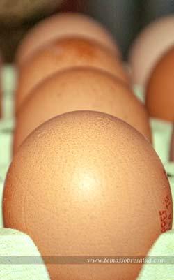 Omega-3 para una salud óptima - ostras