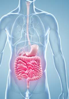 Los alimentos probióticos incluyen yogur, kéfir, chucrut, salsa de soja fermentada, tempeh, kimchi y otros