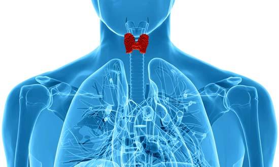 Causas que impiden diagnosticar el hipotiroidismo tiroides