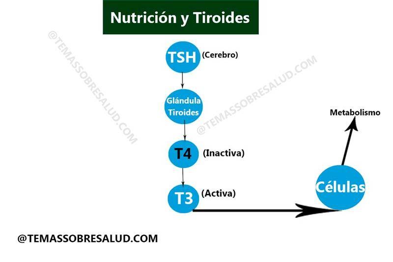 tiroides hipoactiva selenio