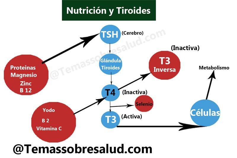 Los efectos del medicamento para la tiroides deficiencias nutricionales
