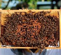 propoleo de abeja para que sirve