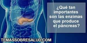 Funciones del páncreas - Enzimas