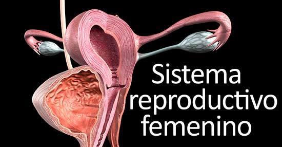 salud del útero