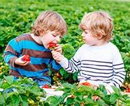 antibióticos en la infancia fresas