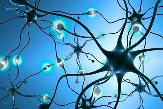 Las alteraciones del Microbioma Intestinal pueden afectar la Acetilcolina, el mensajero químico de la memoria