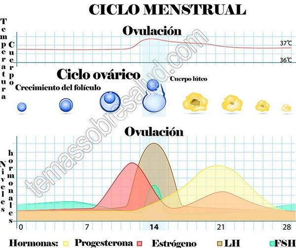 La duración de la fase lútea puede servir a veces como un indicador de los niveles de progesterona.