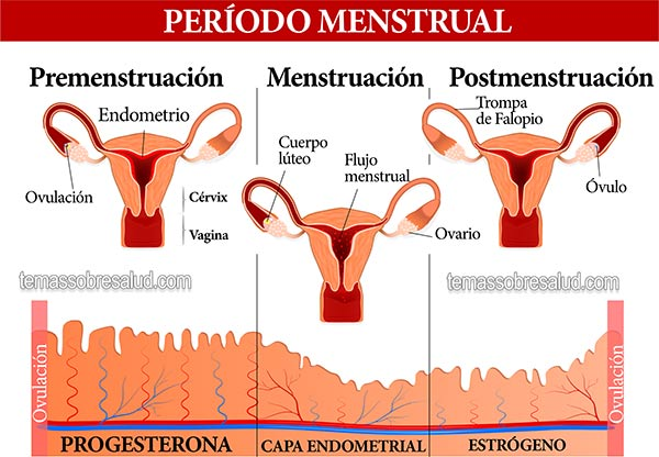 Es normal un flujo cafe antes dela menstruacion