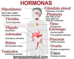 fortalecer las glándulas pituitaria y el hipotálamo