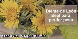 Raíz de Diente de León - limpieza hepática