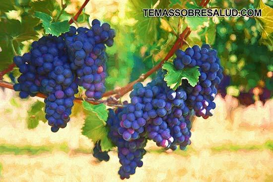 Las fresas son de las mejores frutas para diabéticos Uvas