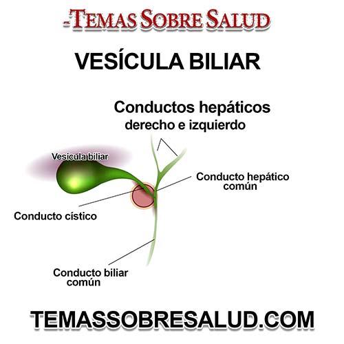 La vesícula biliar es el reservorio de la bilis