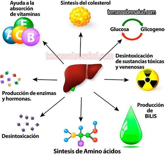 Higado enfermo - Los problemas hepáticos repercuten en la digestión por la falta de bilis