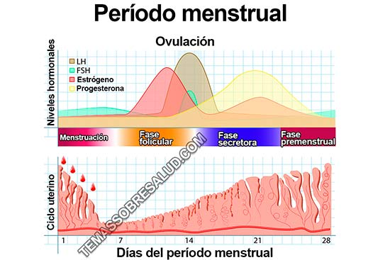 insuficiencia ovárica prematura - Infertilidad por endometriosis