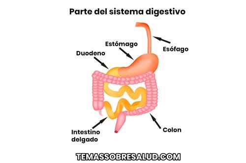 Duodenitis y Cáncer del intestino delgado