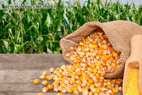 Las lectinas están presentes en el maíz