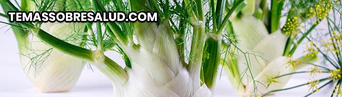 Diuréticos naturales - Hinojo tanto el bulbo como sus semillas son comestibles.