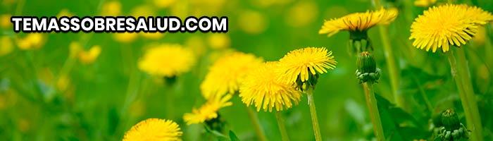 Diuréticos naturales - Diente de León rico en potasio