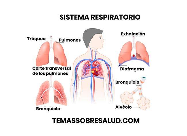 Conjuntivitis alérgica causada por alergia al polvo doméstico