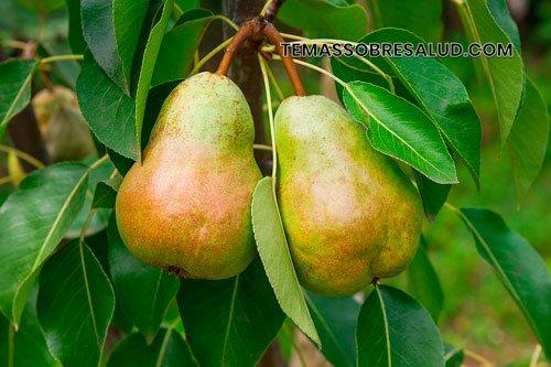 Beneficios de las peras para la salud