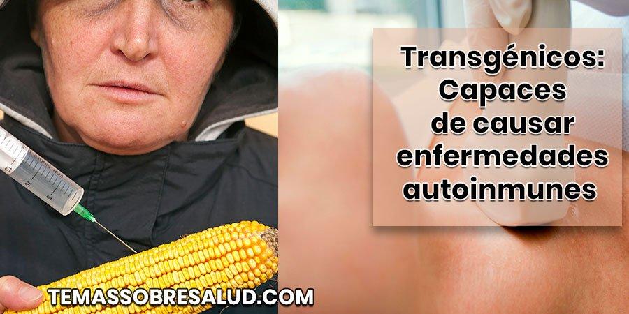 ¿Cómo pueden los transgénicos afectar la salud de la glándula tiroides?