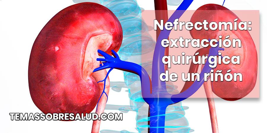 órganos internos riñones