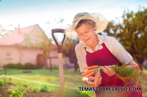 Mujer cosechando zanahorias de su huerto