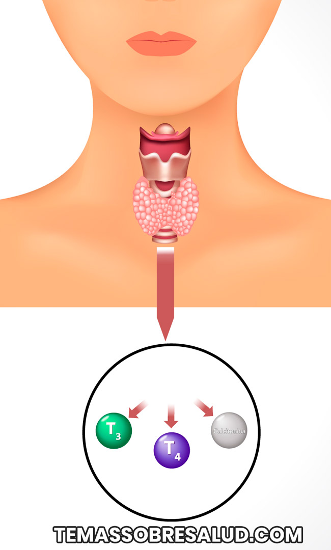 desequilibrio de las hormonas tiroideas
