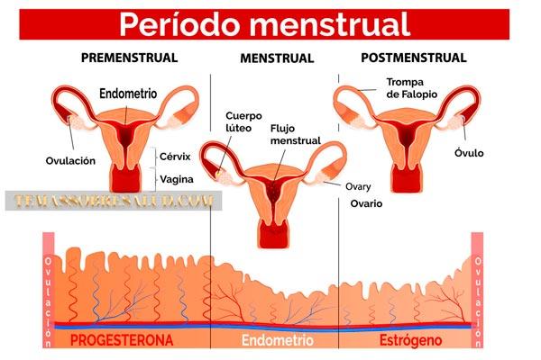 Déficit de progesterona
